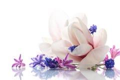 Grupo de flores da mola com magnólia Foto de Stock Royalty Free