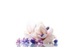 Grupo de flores da mola com magnólia Foto de Stock