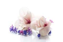 Grupo de flores da mola com magnólia Imagens de Stock Royalty Free