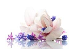 Grupo de flores da mola com magnólia Fotos de Stock