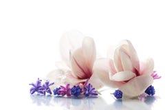 Grupo de flores da mola com magnólia Fotografia de Stock Royalty Free