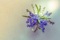 Grupo de flores da mola Snowdrop no fundo branco Foto de Stock