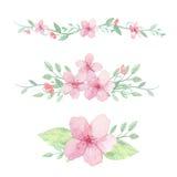 Grupo de flores, de folhas e de ramos Imagem de Stock