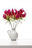 Grupo de flores do lírio de glória de Gloriosa Fotos de Stock Royalty Free