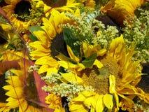 Grupo de flores dos girassóis Imagens de Stock