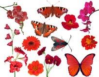 Grupo de flores e de borboletas da cor vermelha isoladas no branco Imagens de Stock Royalty Free