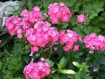 Grupo de flores en un jardín Foto de archivo libre de regalías