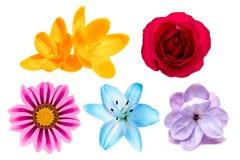 Grupo de flores isoladas no fundo branco Imagem de Stock Royalty Free