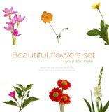 Grupo de flores no fundo branco Fotografia de Stock