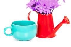 Grupo de flores no potenciômetro molhando com o copo isolado no branco Fotografia de Stock