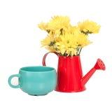 Grupo de flores no potenciômetro molhando isolado no branco Fotografia de Stock Royalty Free