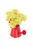 Grupo de flores no potenciômetro molhando isolado no branco Fotos de Stock Royalty Free