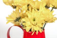 Grupo de flores no potenciômetro molhando isolado no branco Fotografia de Stock