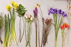 Grupo de flores para fazer o ramalhete com instrumento Fotografia de Stock Royalty Free