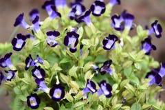 Grupo de flores para o fundo fotos de stock