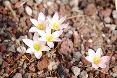 Grupo de flores pequeno Imagens de Stock Royalty Free