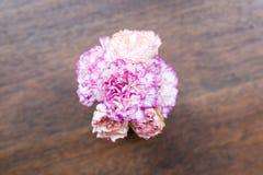 Grupo de flores rosadas fotos de archivo