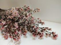 grupo de flores secadas no fundo branco imagens de stock