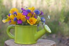 Grupo de flores selvagens foto de stock