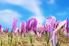 Grupo de flores selvagens da mola Imagem de Stock Royalty Free