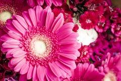 Grupo de flores vermelho brilhante do jardim Fotos de Stock Royalty Free