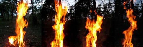 Grupo de fogo de quatro fotos na floresta da noite Fotos de Stock Royalty Free