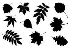Grupo de folhas da silhueta Fotos de Stock