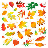 Grupo de folhas de outono coloridas bonitas Elementos do projeto no fundo branco Ilustração do vetor Fotos de Stock Royalty Free