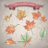 Grupo de folhas de outono do bordo, da castanha e das outras árvores Imagens de Stock Royalty Free