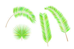 Grupo de folhas de palmeira coloridas Imagem de Stock