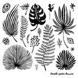 Grupo de folhas de palmeira exóticas da garatuja preta em um fundo branco Ilustração botânica do vetor, elementos para o projeto Fotografia de Stock Royalty Free