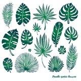 Grupo de folhas de palmeira exóticas e de plantas da garatuja verde em um fundo branco Ilustração botânica do vetor, elementos do Fotos de Stock