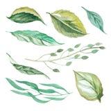 Grupo de folhas diferentes Fotos de Stock