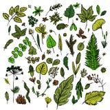 Grupo de folhas diferentes e de ramos tirados ao estilo do ` s das crianças que tira rapidamente à mão ilustração royalty free