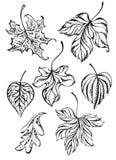 Grupo de folhas do contorno ilustração stock