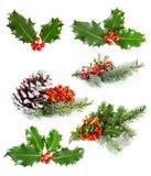 Grupo de folhas e de bagas do azevinho Imagem de Stock
