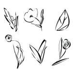Grupo de folhas e de plantas das flores do esboço Fotos de Stock