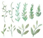 Grupo de folhas e de ramos Imagens de Stock