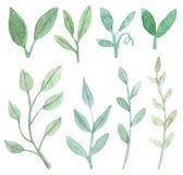 Grupo de folhas e de ramos Foto de Stock Royalty Free