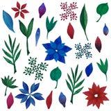 Grupo de folhas e de flores da aquarela Poinsétia Handpainted ilustração royalty free
