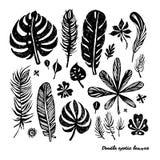 Grupo de folhas exóticas da garatuja na moda preta em um fundo branco Ilustração botânica do vetor, elementos para o projeto Fotos de Stock Royalty Free