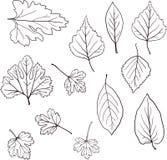 Grupo de folhas lineares do desenho Fotos de Stock Royalty Free