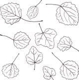 Grupo de folhas lineares do desenho Fotografia de Stock