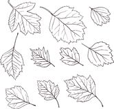 Grupo de folhas lineares do desenho Fotos de Stock
