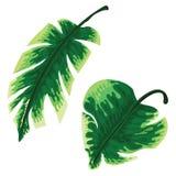 Grupo de folhas de palmeira tropicais isoladas no fundo branco Imagem de Stock