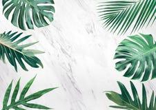 Grupo de folhas tropicais no fundo de mármore Copie o espaço nave imagem de stock royalty free