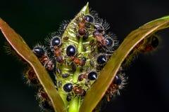 Grupo de formigas Imagens de Stock