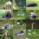 Grupo de 12 fotos dos animais Fotos de Stock
