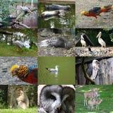 Grupo de 12 fotos dos animais Fotografia de Stock Royalty Free