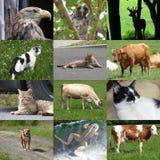 Grupo de 12 fotos dos animais Imagem de Stock